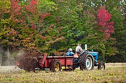 Farmer spreading manure in the fall.