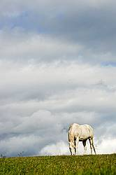 Grey horse on hilltop against big sky.