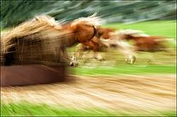 Panning photo of a herd of horses