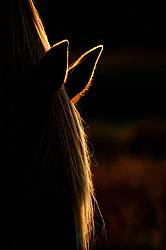 Close up photo of a horse