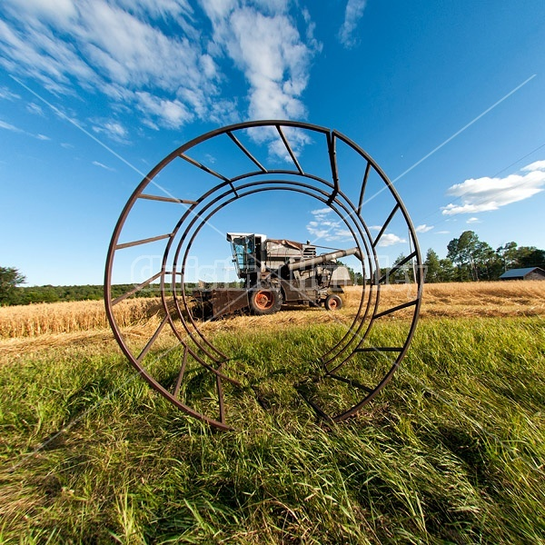 Harvesting a field of oats with a combine harvester