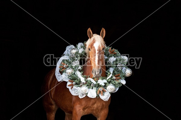 Belgian draft horse with a Christmas wreath over its head.