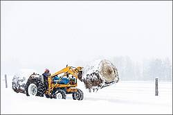 Farmer driving tractor carrying hay